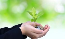 ЛАММ-счета для инвесторов. Что такое ЛАММ-счета?